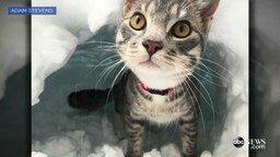 Смотреть Кот роет нору в снегу