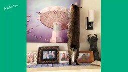 Смотреть Короткие приколы с котиками