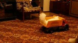 Кошка любит кататься в кузове грузовика