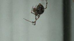 Смотреть Паук испугался паука