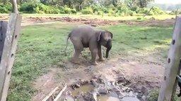 Слонёнок испугался козлёнка смотреть видео прикол - 0:16
