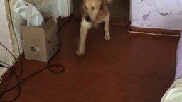 Пса переполняют эмоции смотреть видео прикол - 2:39