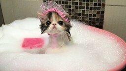 Смотреть Кошка принимает ванну