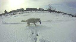 Смотреть Белая собака на белом снегу
