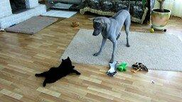Чертёнок против серого пса смотреть видео прикол - 2:35