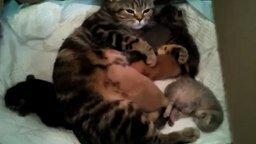 Смотреть Кошка кормит котят и щенят