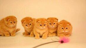 Смотреть Пять солнечных котят