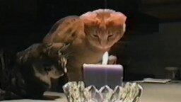 Смотреть Кот разобрался с огнём свечи