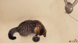 Смотреть Котёнок играет с водой