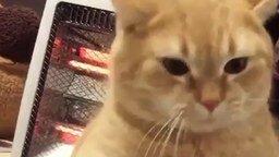 Не зли грозного котика