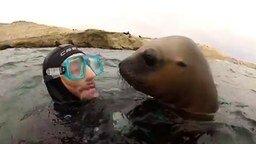 Любвеобильный морской котик смотреть видео прикол - 1:28