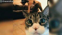 Смотреть Весёлости с котами