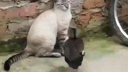 Смотреть Утка прогоняет кота