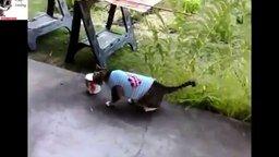 Смотреть Кошачьи провалы и курьёзы