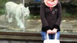 Смотреть Нападение тигра на человека