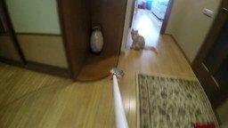 Котёнок атакует камеру