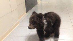 Смотреть Симпатичный медвежонок