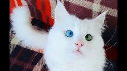 Смотреть Один глаз голубой, другой - зелёный