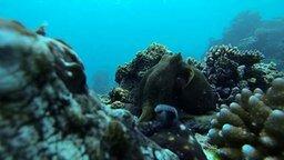 Смотреть Бой осьминогов за дом