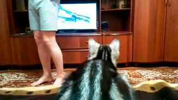 Смотреть Кошка смотрит телевизор