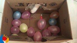 Смотреть Кот лопает шарики