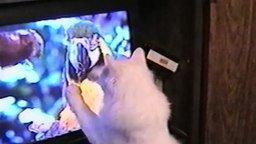 Питомцы против современных устройств смотреть видео прикол - 1:59