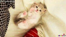Смотреть Сладкий котёночек