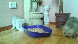 Смотреть Котята и лоток