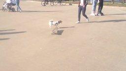 Смотреть Собака учится катанию на скейте