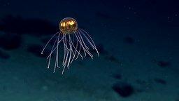 Обнаружена новая медуза смотреть видео прикол - 0:43