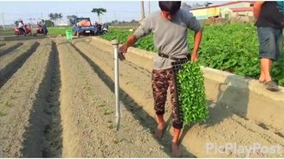 Смотреть Китаец высаживает рассаду