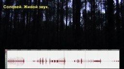 Смотреть Соловей - живой звук