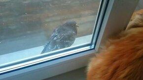 Смотреть Кот против голубя