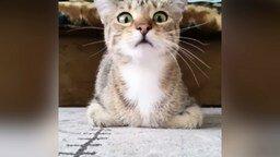 Кот смотрит ужастик смотреть видео прикол - 0:34