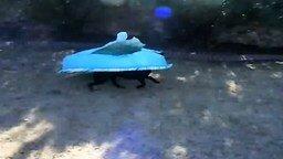 Живой бассейн смотреть видео прикол - 0:25