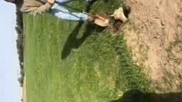 Спас детёныша альпаки смотреть видео - 2:59