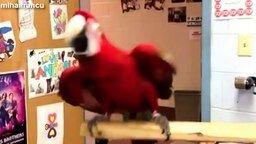 Смотреть Смешные попугаи танцуют