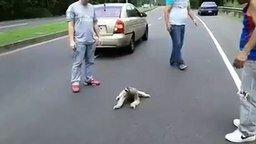 Ленивец на дороге смотреть видео прикол - 1:00