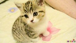 Смотреть Милейший котёночек