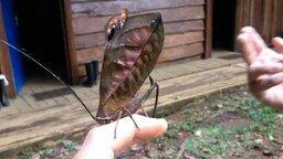 Смотреть Удивительное насекомое