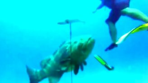 Окунь - гигант морских глубин смотреть видео прикол - 0:54