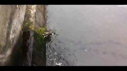 Смотреть Спасли собаку из канала