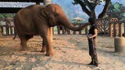 Смотреть Слон засыпает под колыбельную