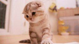 Смотреть Чем занят котёнок в коробке
