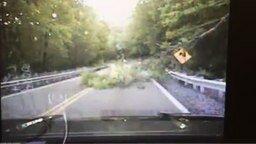 Дерево покусилось на жизнь полицейского