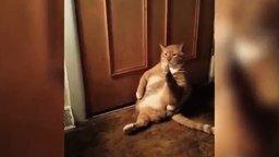 Кот и его трудно досягаемая лапа