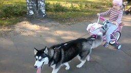 Смотреть Одна собачья сила для девочки
