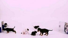 Смотреть Котята против щенят