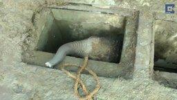 Смотреть Спасли слонёнка