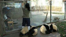 Смотреть Панды-хулигашки